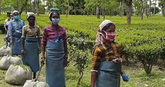 Assam's Breathers For Tea Industry To Tackle Post-Covid Finance Crunch