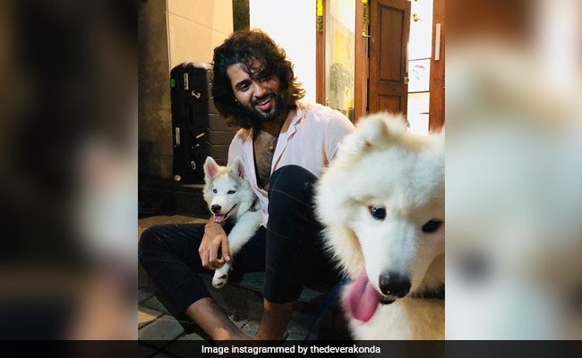 This Pic Of Vijay Deverakonda With His Furry Friends Has The Internet's Heart