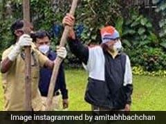 अमिताभ बच्चन के लिए क्यों खास है पहला घर और उसमें लगा गुलमोहर का पेड़, ट्वीट कर दी जानकारी