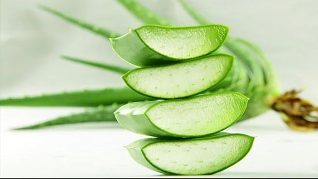 Benefits Of Aloe Vera For Beauty: Aloe Vera Is Helpful In Removing Skin, Hair, Pimples And Dark Spots On The Face