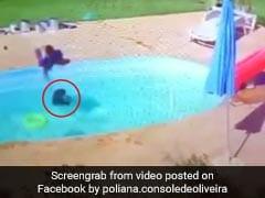 Viral Video: पूल में डूब रहा था दोस्त, 3 साल के बच्चे ने बहादुरी से किया ऐसा काम, हर तरफ हो रही तारीफ