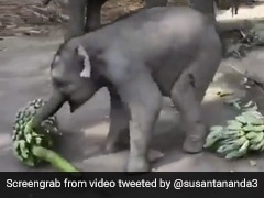 Just 5 Adorable Videos Of Baby Elephants To Brighten Your Day