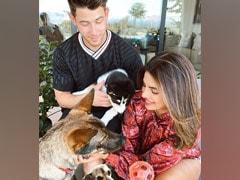 Meet Panda - The Latest Addition To Priyanka Chopra And Nick Jonas' Family