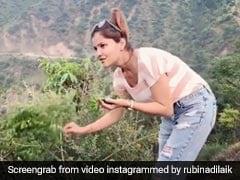 टीवी एक्ट्रेस Rubina Dilaik जगंल में अचानक तोड़ने लगीं कढ़ी पत्ता, बोलीं- जो मिल जाए, सब घर... देखें Video