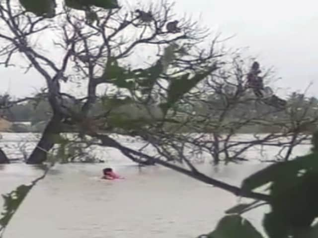 Video : Monkeys Stranded In River For 2 Days Amid Rain In Karnataka
