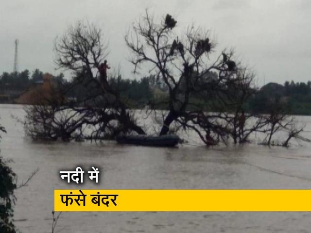 Videos : कर्नाटक में नदी के बीच फंसे बंदर