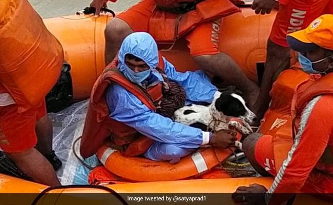 Karnataka Shepherd's 'Presence Of Mind': Official Shares Flood Story