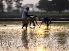 August Rain Holds Key To Recovery In Rural Economy After Erratic Monsoon