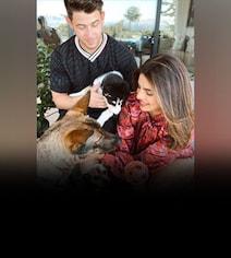 Meet Panda - The Latest Addition To Priyanka And Nick Jonas' Family