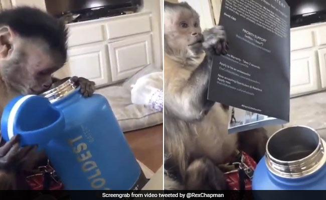 बंदर को गिफ्ट में मिला पानी का बोतल, यूज करने से पहले इंसानों की तरह देखने लगा मैन्युअल बुक.... देखें VIRAL VIDEO