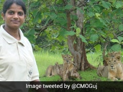 World Lion Day: Meet Rasila Vadher, The Lion Queen Of Gir