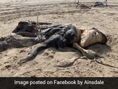 Mysterious 15-Foot Creature Found Washed Up On Beach, Leaves People Stunned