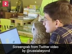 This Owl Cafe In Russia With Birds As Pets Is A 'Hoot' With Visitors!