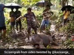 1-Year-Old Female Rhino Calf Rescued From Near Kaziranga National Park In Assam