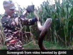 Uttarakhand Farmers Find 2 Huge Pythons In Field. Watch Their Rescue