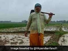 Odisha MLA, Wife Work 2 Months On 25-Acre Farm, Ploughing, Sowing Paddy
