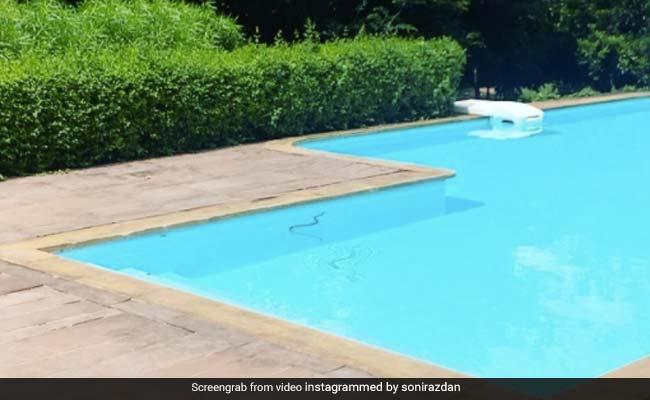 आलिया भट्ट के घर स्विमिंग पूल में निकला सांप, पहले पानी में मारी डुबकी और फिर...Viral हुआ Video