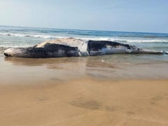 Blue Whale Washed Ashore On Tamil Nadu Beach