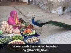 सब्जी बेंचने वाली महिला ने भूखे मोर को देखते ही हथेली में निकाला चावल और फिर... देखें VIDEO