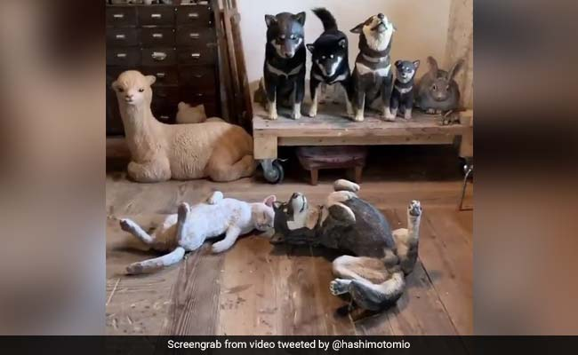 Viral Video: Can You Spot The Real Dog Among Life-Size Wooden Replicas?