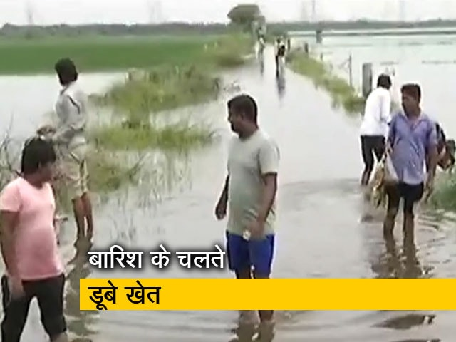 Videos : बारिश से बर्बाद हुई धान की फसल