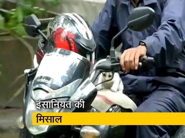 Video : मुंबई में एक शख्स ने बिल्ली के बच्चे को बारिश से  बचाया
