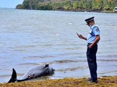 """Heartwrenching:"" 40 Dolphins Found Dead In Mauritius Oil Spill Area"