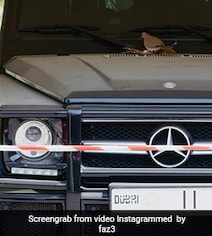 Dubai Prince Cordons Off Mercedes After Birds Build Nest On It. Watch