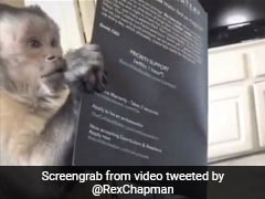Monkey's Delight At Receiving A Gift Amuses Twitter. Video Is Viral