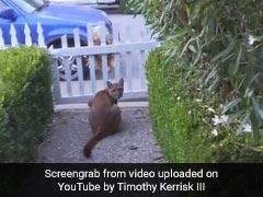 भूखे शेर ने शहर में घुसकर मचाया आतंक, बच्चों को खेलता देख किया कुछ ऐसा - देखें Viral Video