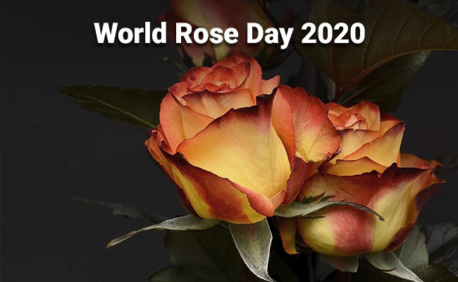 World Rose Day 2020: Changing The Way We Look At Cancer