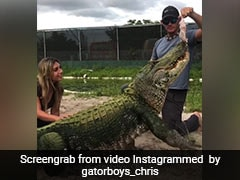 Giant Alligator Gets Embarrassed After Failing To Catch Food In ROFL Video