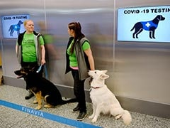 Finland's Airport Uses Dogs To Sniff Out Coronavirus