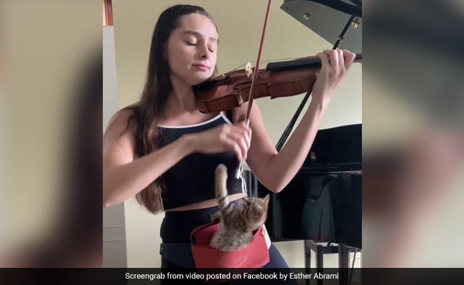 Kitten Enjoys A Soothing Violin Performance In Adorable Viral Video