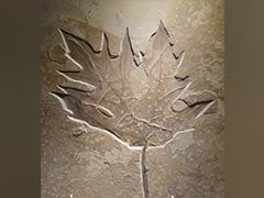 Fossilised Leaves About 150-200 Million Years Old Found In Jharkhand