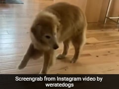 This Dog Dancing At The Sight Of Food Has Netizens In Stitches