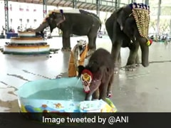 "Video: Baby Elephant ""Shivani"" Plays In Water After Her Naming Ceremony"
