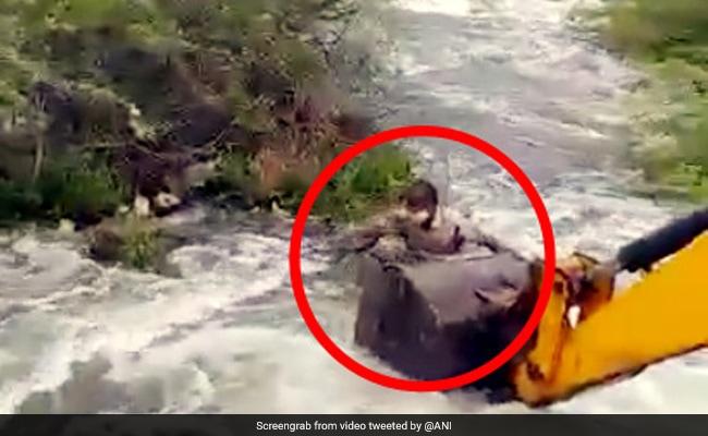 कुत्ते को बचाने के लिए JCB से नदी में कूद गया जवान, ऐसे बचाई जान... देखें Viral Video