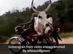 बैल को बाइक पर बैठाकर ले जा रहा शख्स, सुनील ग्रोवर ने शेयर किया फनी Video
