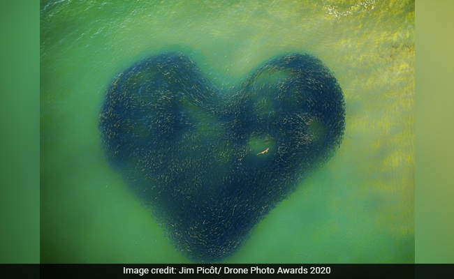 Shark In Heart-Shaped School Of Fish And Other Winners From Drone Awards 2020