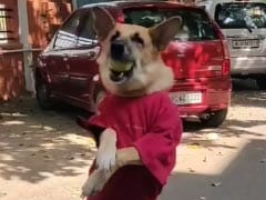 गली क्रिकेट खेल रहे थे लड़के, लगाया शॉट तो कुत्ते ने हवा में उड़कर पकड़ा जबरदस्त कैच - देखें Viral Video