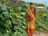Video : Women in Gujarat Grow Kitchen Gardens To Ensure Food Security During COVID-19 Pandemic
