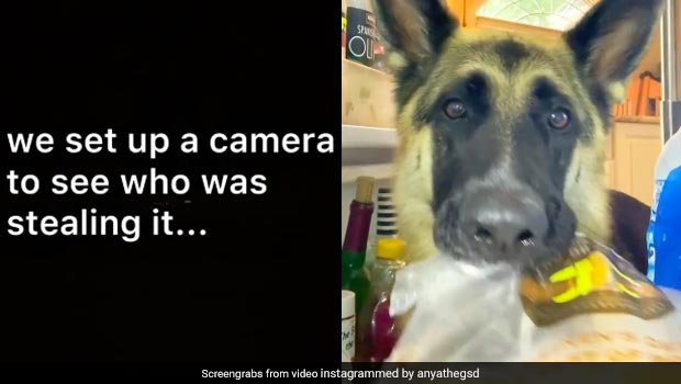 Cheese Kept Disappearing From Fridge, Thief Turned Out To Be Adorable Dog