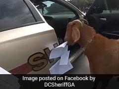 पुलिस की कार के अंदर घुस गई बकरी, खाने लगी जरूरी पेपर, बाहर निकालने में छूटे पसीने... देखें Video
