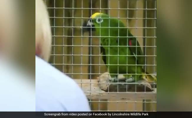 तोते ने लोगों को देख पिंजरे के अंदर से गाया ऐसा गाना, देखकर लोगों के उड़े होश... देखें Viral Video