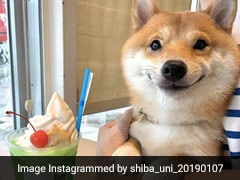 Paw-Dorable! Dog From Japan Smiles Every Time He Sees Food; Cute Pics Go Viral
