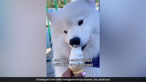 Watch: Video Of Dog Eating Ice Cream Is The Cutest Thing On The Internet Today