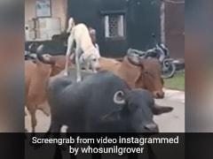 Viral Video: भैंस की पीठ पर चढ़कर यूं की कुत्ते ने सवारी, Sunil Grover ने शेयर किया Video