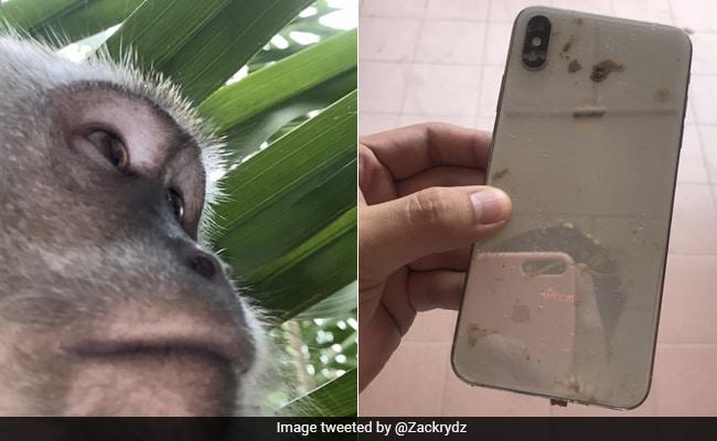 सोते वक्त शख्स का फोन उठा ले गया बंदर, जंगल में जाकर लीं सेल्फी, देख मालिक के उड़े होश - देखें Video
