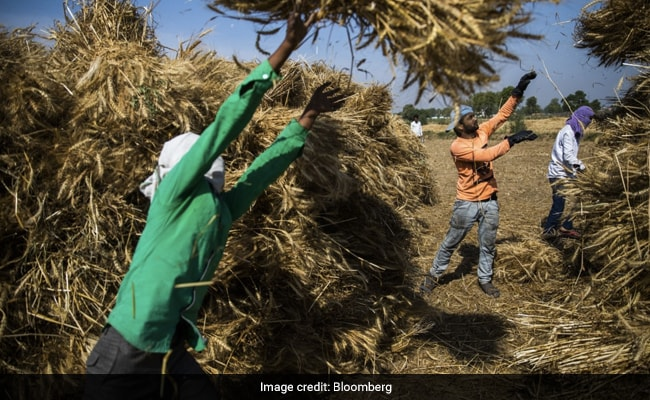 Migrant Workers Fed Drugs, Made To Work In Punjab Farms: Home Ministry Letter